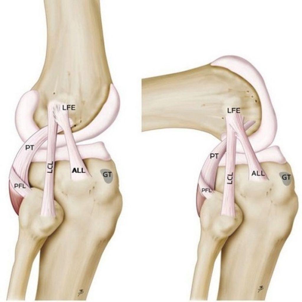 Knee-Ligaments-1024x1024.jpg